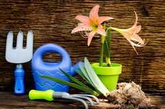 Spring gardening ,Planting over old wood background Royalty Free Stock Photography