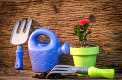 Spring gardening ,Planting over old wood background Royalty Free Stock Images