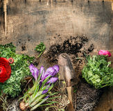 Spring gardening with scoop on rustic wooden background, top view Royalty Free Stock Images