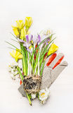 Spring gardening setting with flowers , soil and work gloves, top view Stock Photo