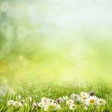 Spring gargen Stock Image