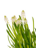 Spring gentle fresh bouquet Stock Photography