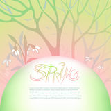 Spring gentle vector illustration. March, flowering snowdrops in a snowy forest. Branches of trees and flowers. Semicircle space for text. Elements design for Stock Photos