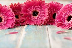 Spring gerbera flowers bouquet on rustic wooden background. Birthday, holiday, mother or womans day greeting card. stock image