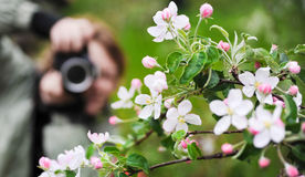 Spring. Girl-photographer takes a picture of blossoming branch. It is green around Stock Photos