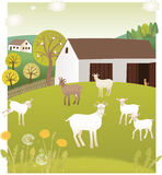 Spring goats Stock Images