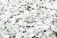 Spring going after winter. Snows cover with grass fields Stock Photo