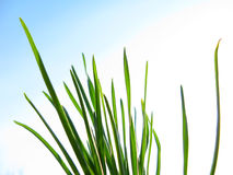 Spring grass Stock Photos