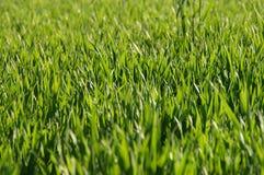 Spring Grass Stock Photos