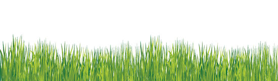 Spring grass Royalty Free Stock Photos