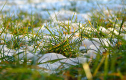 Spring Grass. Green Grass covered with snow on a spring sunny day Royalty Free Stock Photo