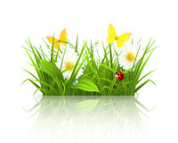 Spring grass. Computer illustration on a white background Stock Images