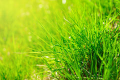 Spring grass Stock Photo