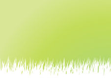 Spring Grass. Green and white grass and sky background for easter or spring Royalty Free Stock Photo