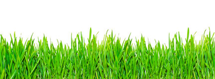 Spring grass Royalty Free Stock Images