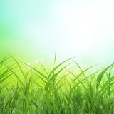Spring grass background Stock Photo