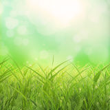 Spring grass background Stock Images