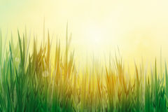 Spring grass background Royalty Free Stock Photography