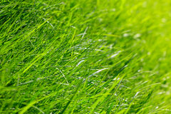 Spring grass background Stock Photography