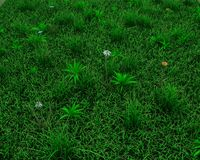 Spring grass background Royalty Free Stock Photos