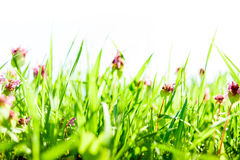 Spring grass background royalty free stock images