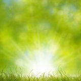 Spring Grass Background. Grass foreground in front of sunny forest background Stock Photo