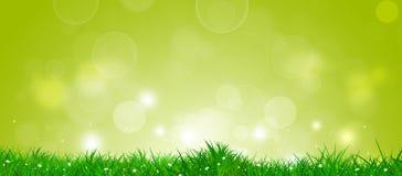 Spring Grass Banner Stock Image
