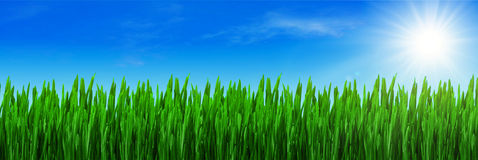 Spring grass and blue sky Royalty Free Stock Image