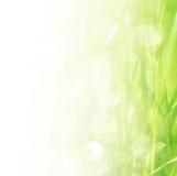Spring grass border Stock Photos