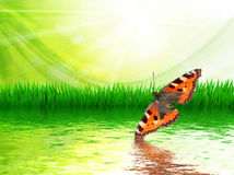spring grass and butterfly Royalty Free Stock Photos
