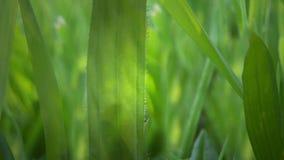 Spring Grass stock footage