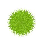 Spring grass circle shape isolated on white background Stock Photo