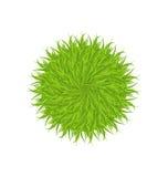 Spring grass circle shape isolated on white background Stock Photo