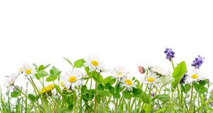 Spring grass and daisy wildflowers isolated background stock illustration