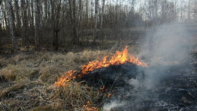 Spring grass danger fire in forest Royalty Free Stock Photography