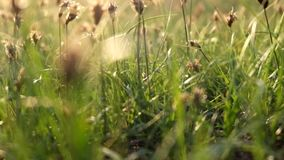 Spring grass in desert footage stock video footage