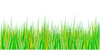 Spring grass. Easter decoration with spring grass and meadow flowers. Isolated on white background. Vector. Illustration Royalty Free Stock Photography