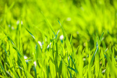 Spring grass in field with beauty bokeh Stock Images