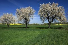 Spring grass fields landscape. Spring fields, green grass, countryside landscape, blossom tree orchard Royalty Free Stock Image