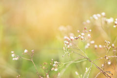 Spring grass flower field with sunset light in the morning with copy space Royalty Free Stock Photo