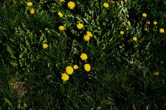 Spring grass with flowers stock photo