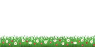 Spring grass and flowers border. Vector illustration. royalty free illustration