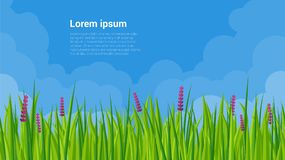 Spring grass and flowers. Fresh green meadow and clear sky vector background template Royalty Free Stock Image