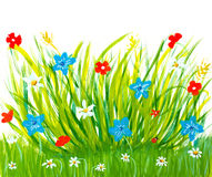 Spring grass and flowers. Simply meadow brush childish drawing Stock Photo