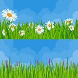 Spring grass and flowers. Fresh green meadow and clear sky seamless  vector background set Royalty Free Stock Images