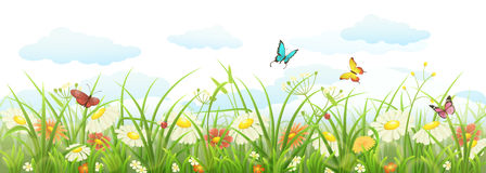 Spring grass and flowers. Spring summer banner with green grass, flowers and butterflies Stock Images