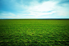 Spring grass grows on the field Stock Images