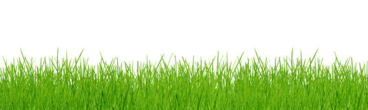 Spring grass isolated on white. Agriculture background botany clean close-up royalty free stock images