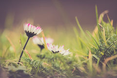 Spring is on Royalty Free Stock Photos