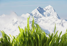 Spring grass in mountains. Fresh green spring grass in high mountains Royalty Free Stock Image